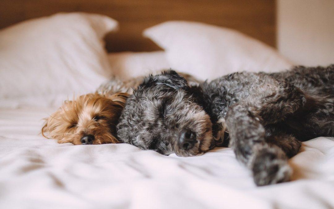 Wie ist eigentlich… das Schlafbedürfnis unserer Hunde?