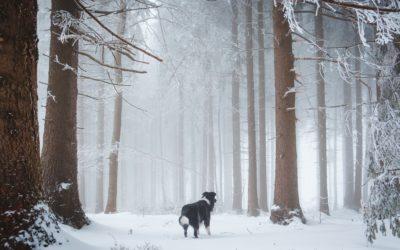 Aus dem Leben mit Hund: Winter