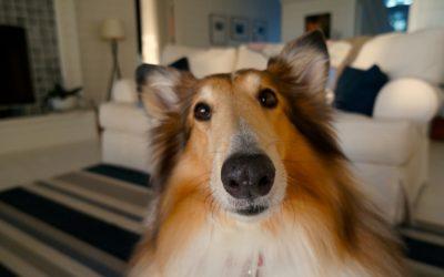 Aus dem Leben mit Hund: Hundehaare