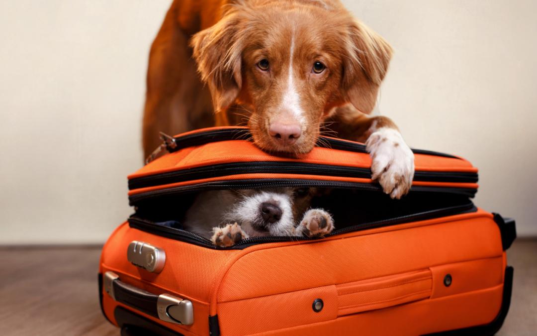 Mit dem Hund in den Urlaub: 5 Tipps für eine gute Planung