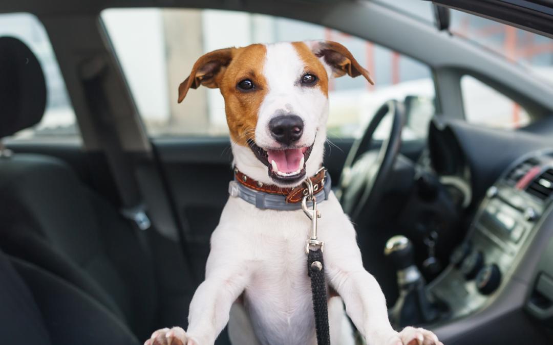 Wie ist das eigentlich… mit dem Hund im Auto?