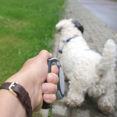 Hilfe, mein Hund zieht! Teil 2